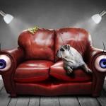 I divani in pelle, pregi e difetti