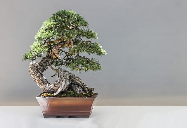 Quello che devi sapere sul bonsai carmona