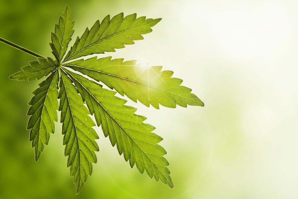 Essicazione della Cannabis